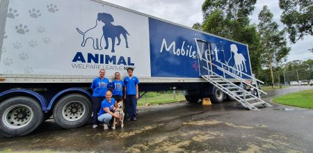 Vets Beyond Borders volunteers on standby for NSW flood emergency