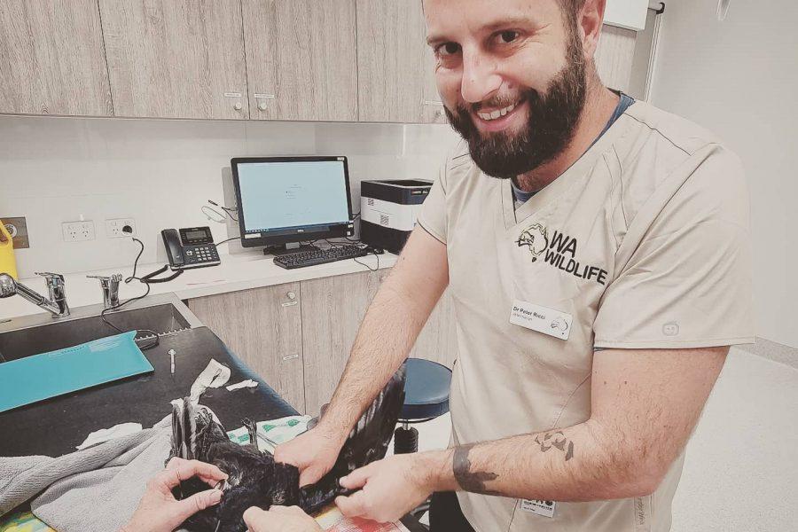 Seeking WA-based volunteer veterinarians
