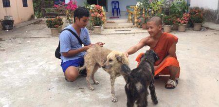 World Spay Day 2021: Partner Spotlight – Phnom Penh Animal Welfare Society